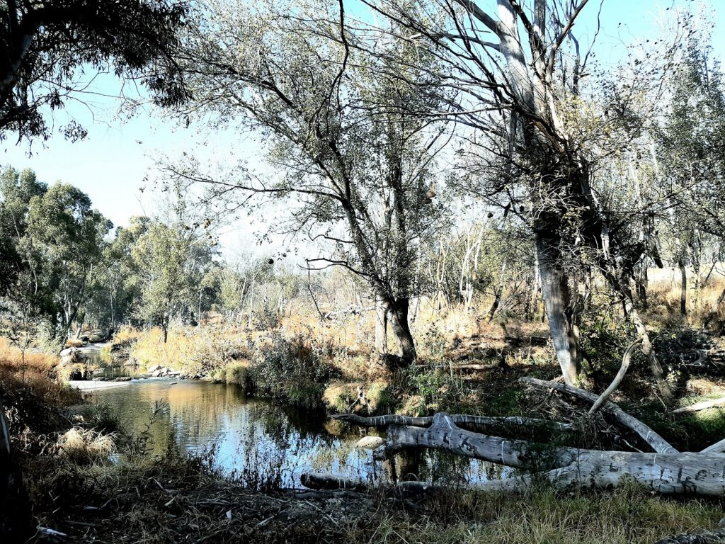 modderfontein nature reserve spruit route