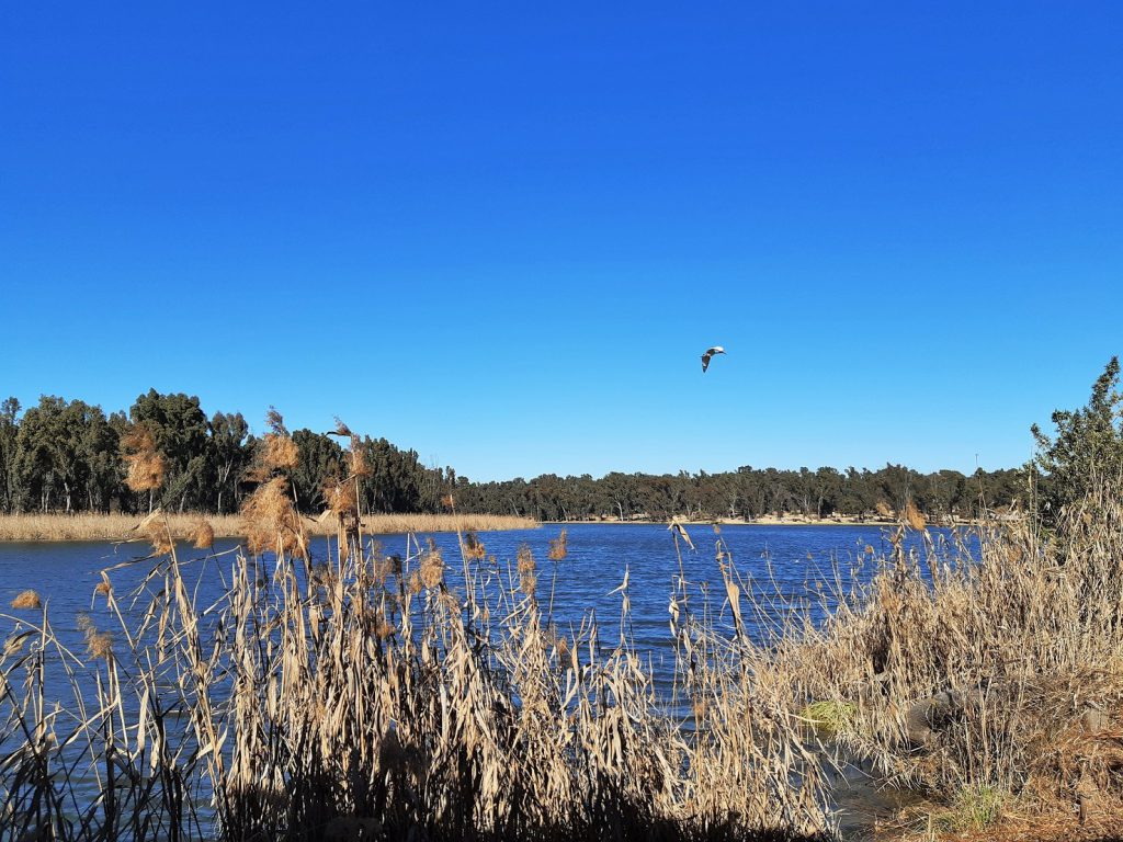 modderfontein nature reserve bird hide